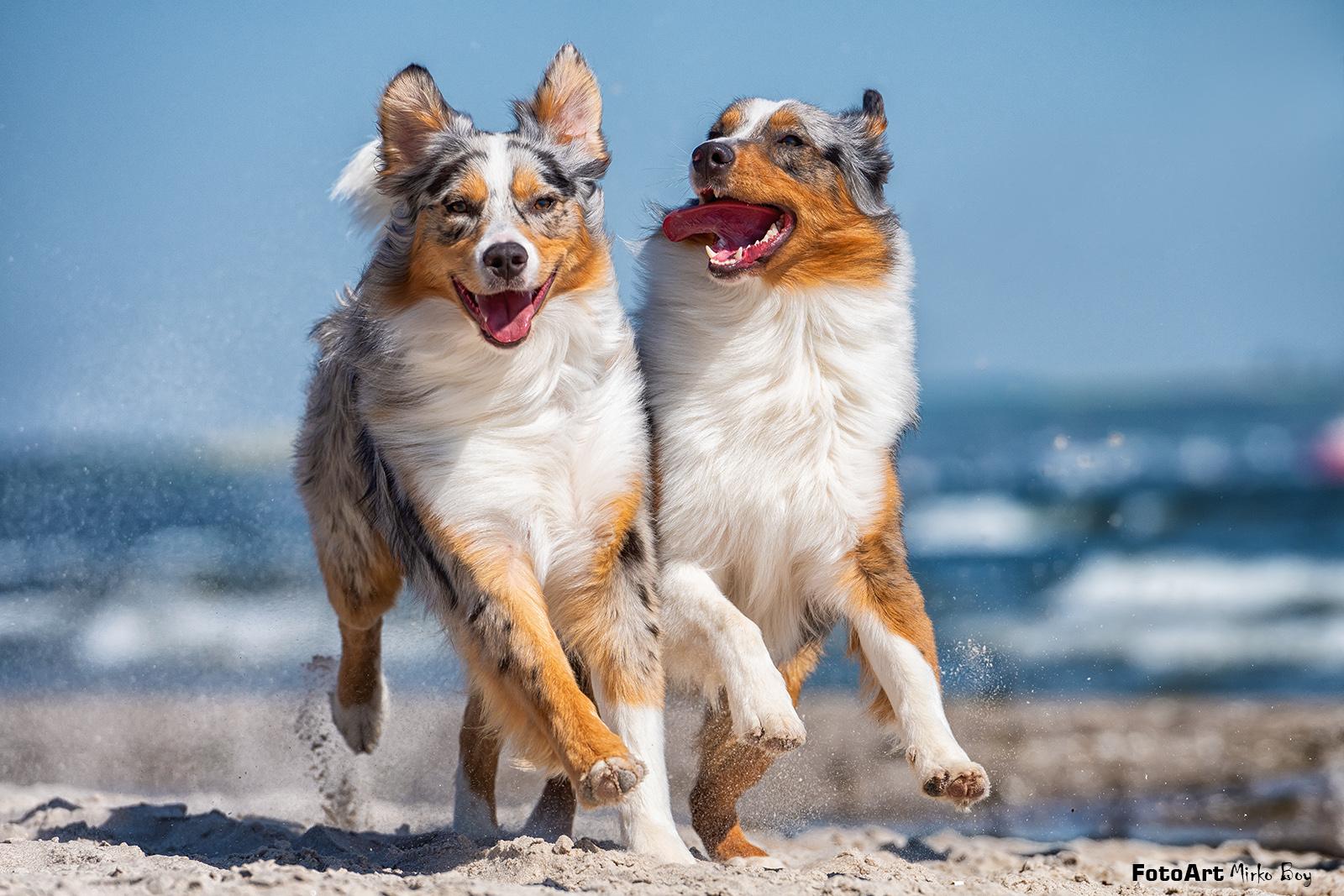 Hundeshooting am Strand - Fototouren