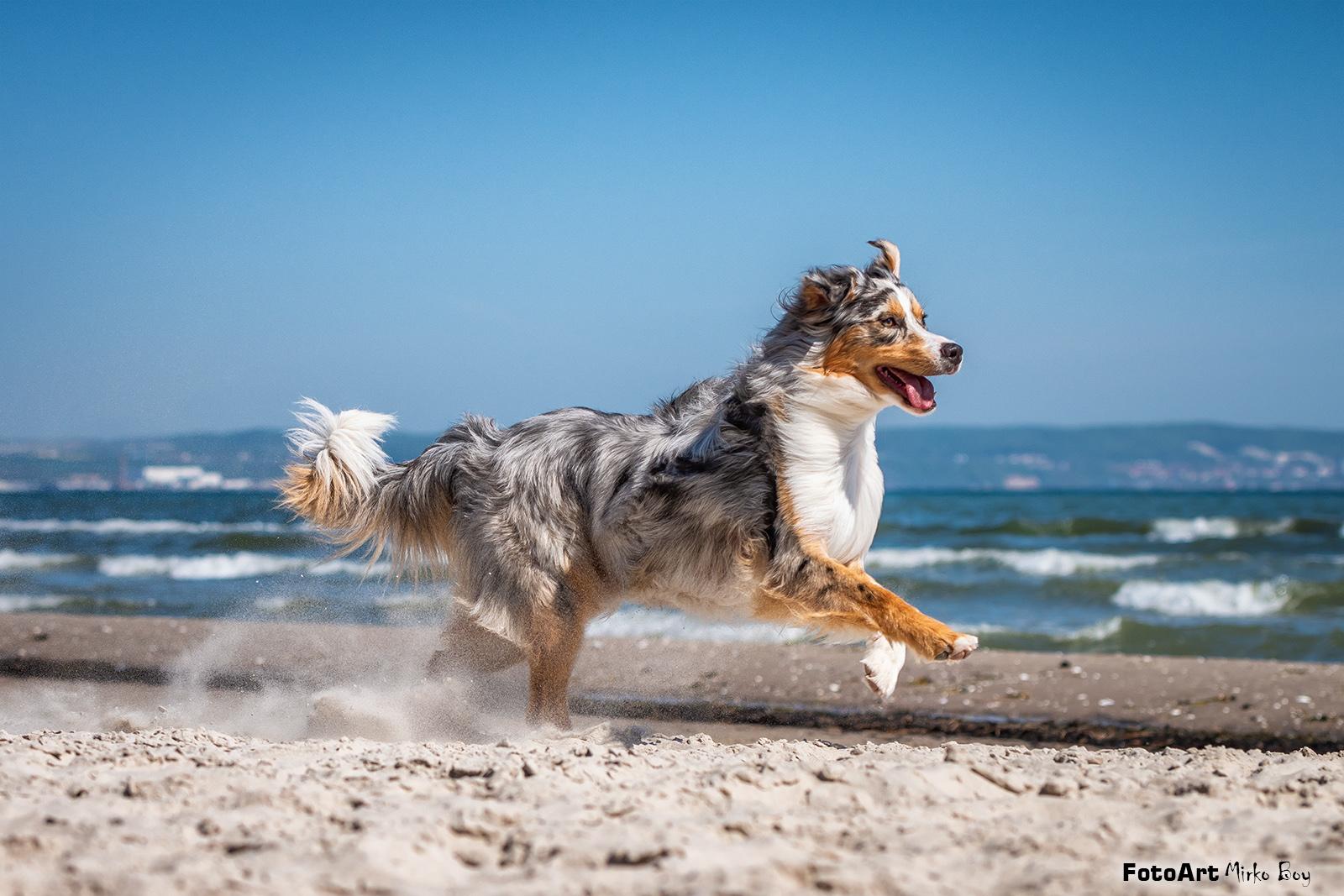 Shooting Hund - Fototouren