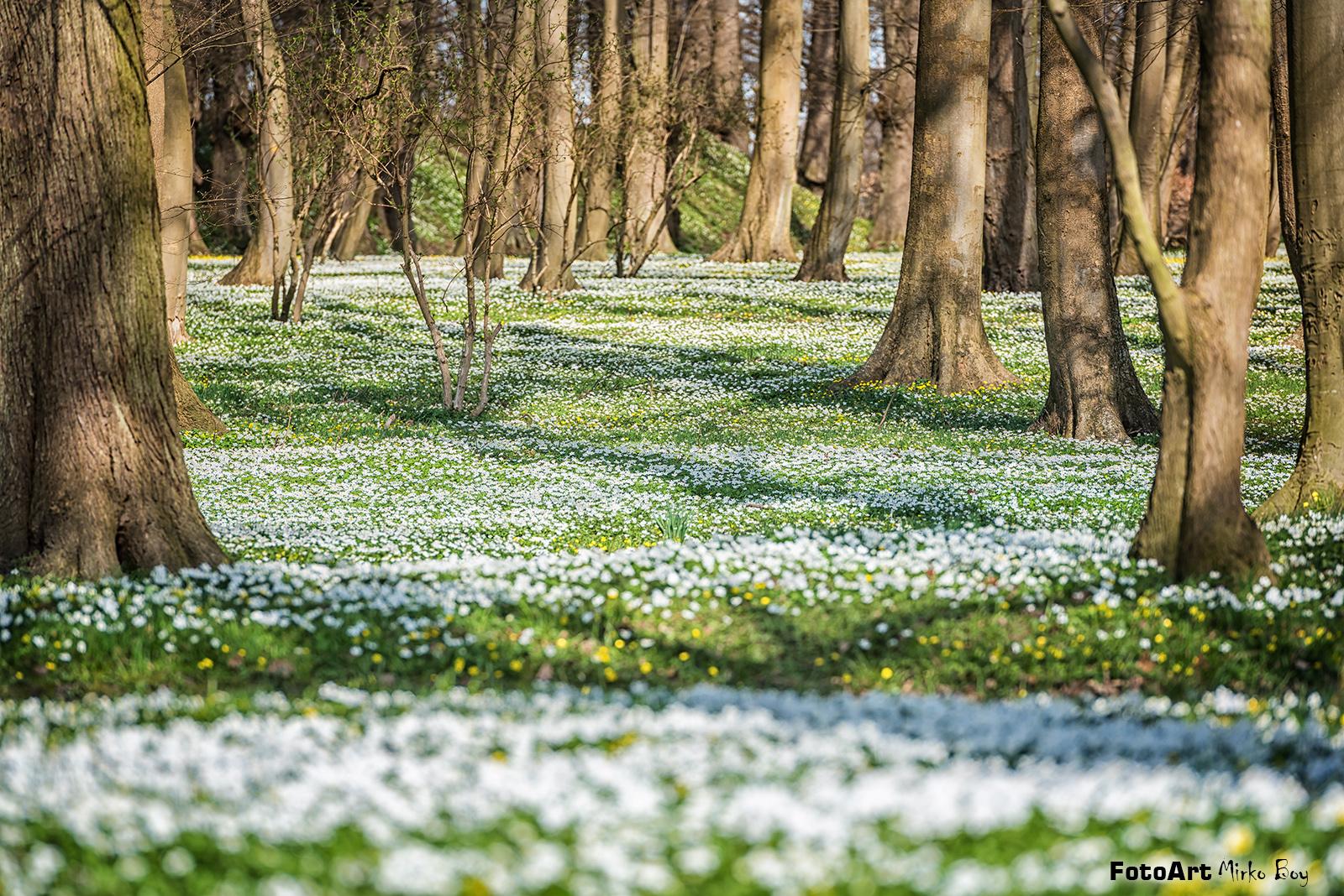 Frühling, Wald, Buschwindröschen - Fototouren