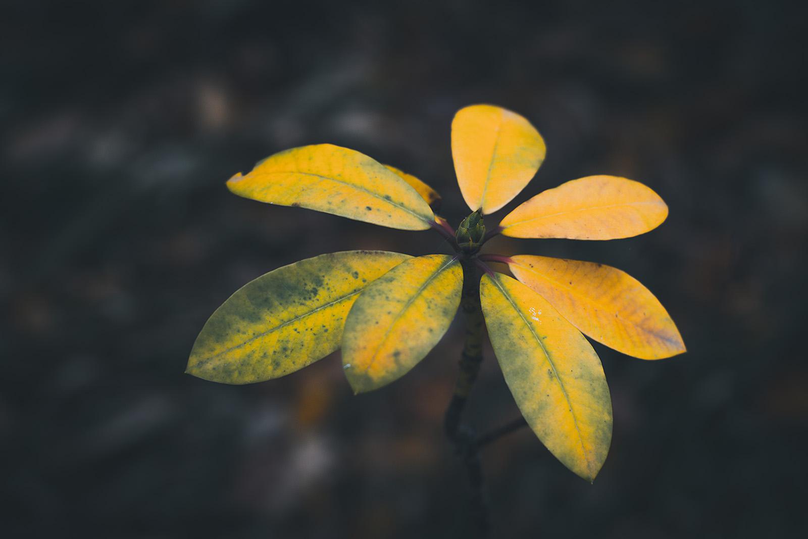 Herbstblatt - Fototouren