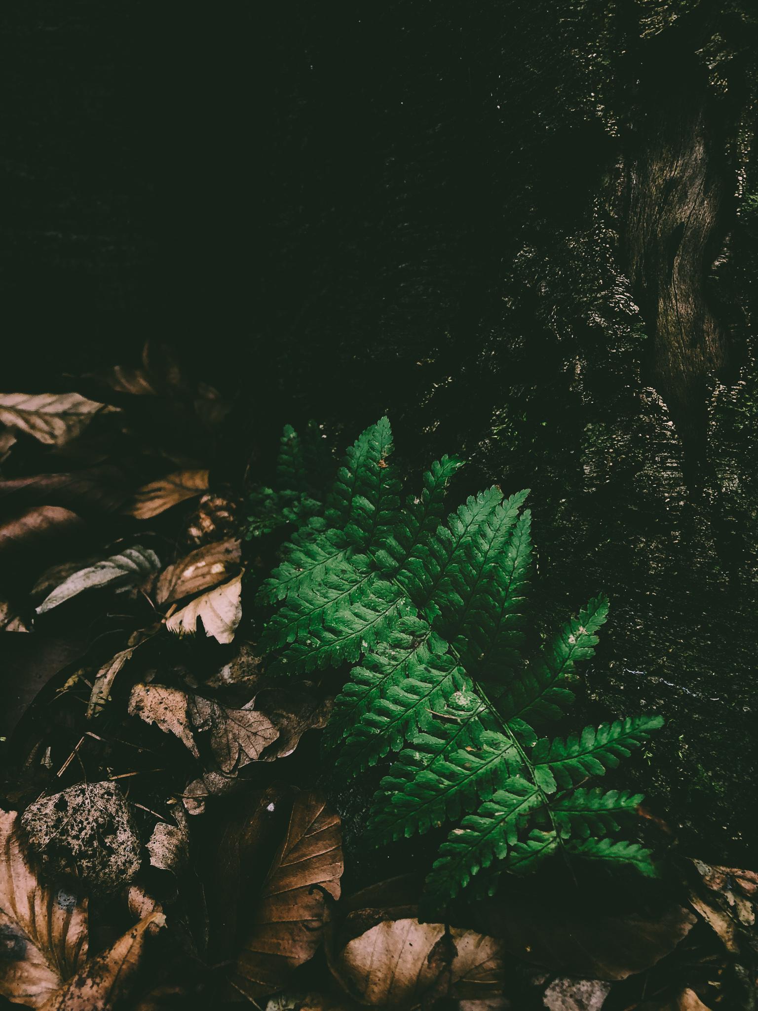 Natur, Herbst - Fototouren